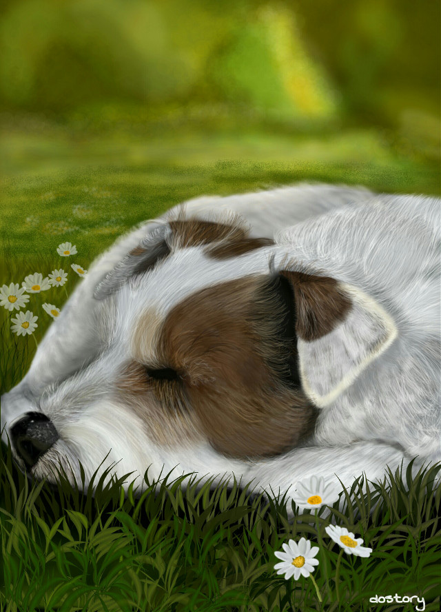 sleeping dog 🔸My dog Chili Pepper (Parson Russell Terrier) #drawing #digitaldrawing #dog  #petsandanimals