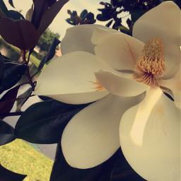 wppflowers wppfloralcanvas wppwhite wppautumnvibes wapatumnvibes