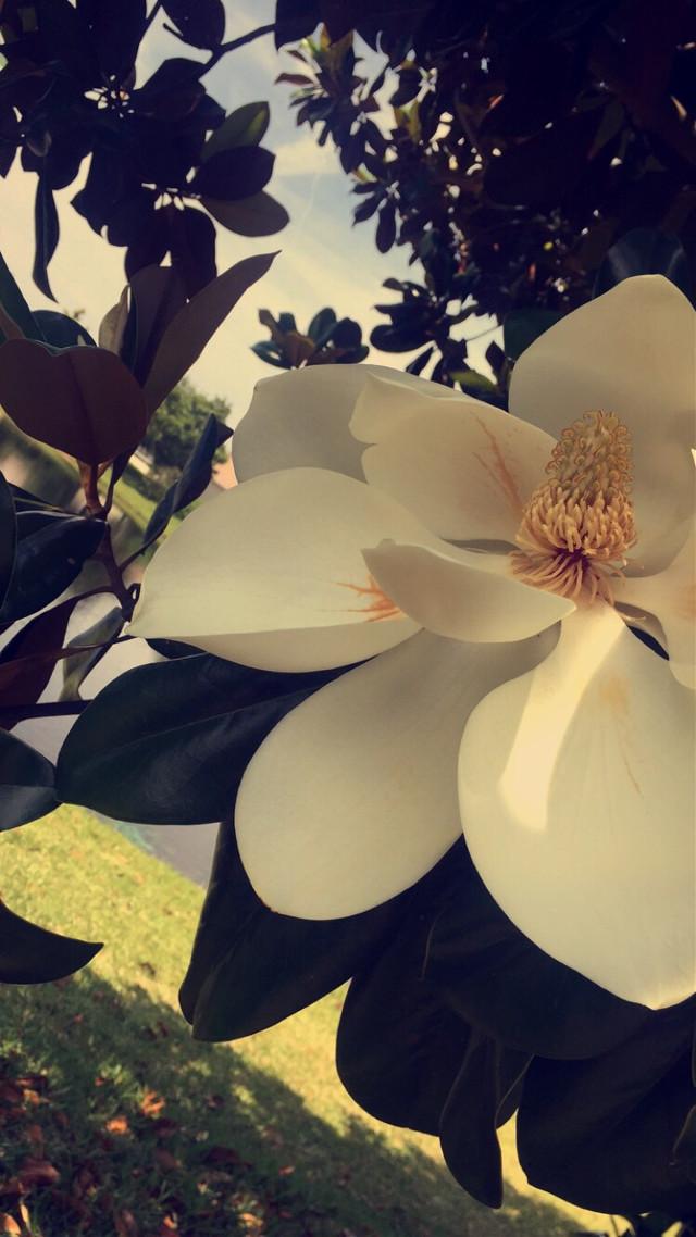 #wppflowers #wppfloralcanvas #wppwhite #wppautumnvibes #wapatumnvibes