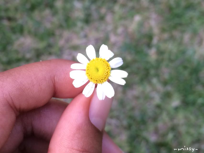 Tiny flower 🙂