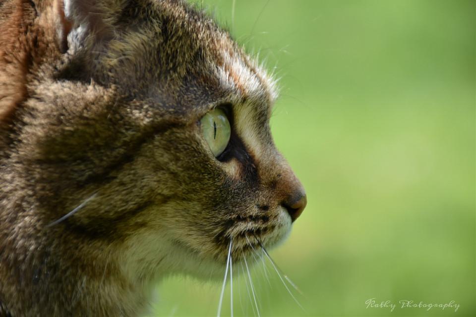 #photography  #cat #animal l