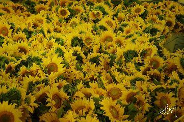 wppflowers flowers beautiful