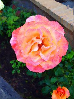 oregon roses portland portlandoregon polygon