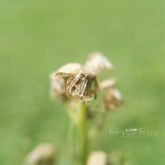 freetoedit photography macro nature shallowdepthoffield