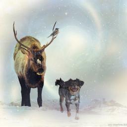 friendship snow winter nature petsandanimals freetoedit
