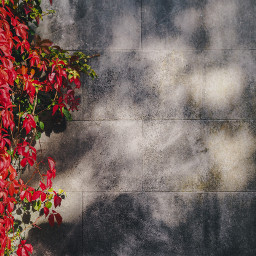freetoedit background leaves texture