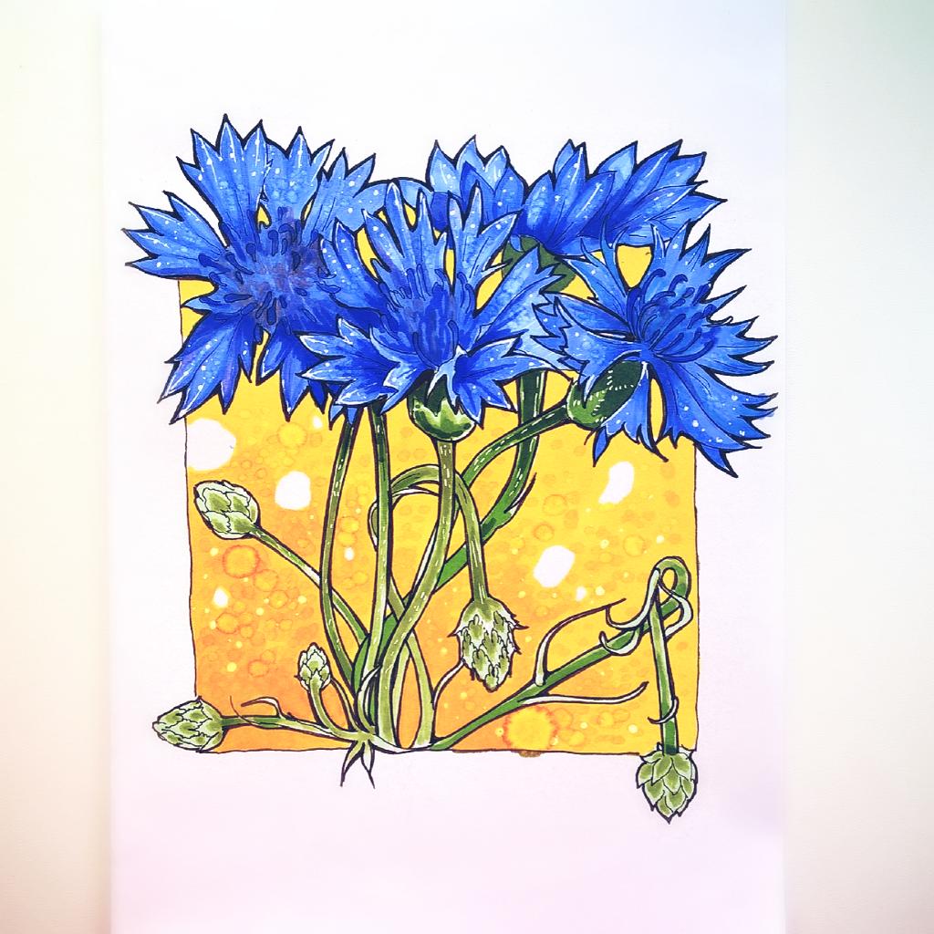 Centauréa #drawing #sketch #summer #nature #flowers #colorsplash #emotions