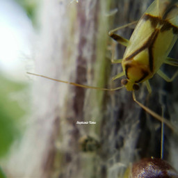 photography summer macro bugs closeup