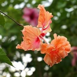 flower travel photography