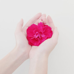 freetoedit flower nature people emotions wppfloralcanvas dpchands