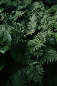 fern tropical summer nature plants