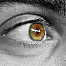 myloveseye macro eyes lookingthrough colours freetoedit