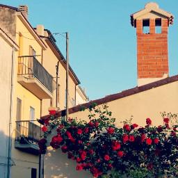 sundaymorning italy roses view nature freetoedit
