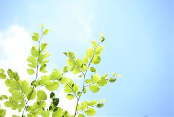 freetoedit greenleaves bluesky sunshine nature