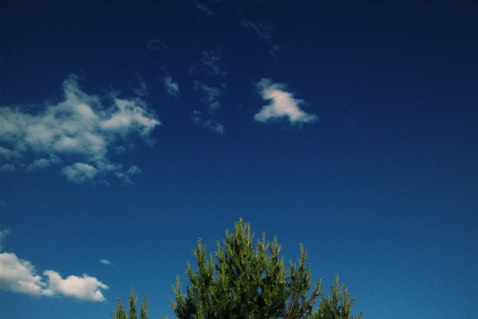 #nature #photography #summer #green #spruce #firtree #sky #clouds #cloudy #blue #bluesky #skyandclouds