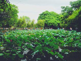 summer beutiful vietnamese