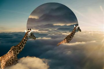 touch the sky nature giraffes
