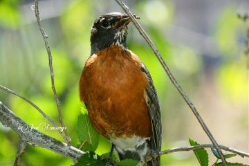 birds nature photography nikon food