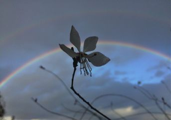 interesting rainbow flower colorful sky