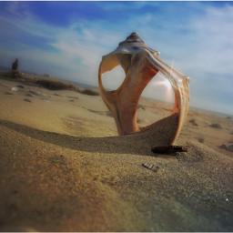 backgroundblur nettesdailyinspiration beach assateague shell