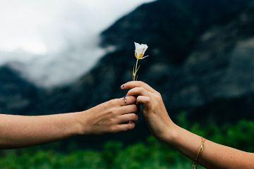 freetoedit nature human hand flower