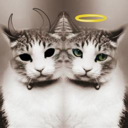 freetoedit edited petsandanimals cat angel