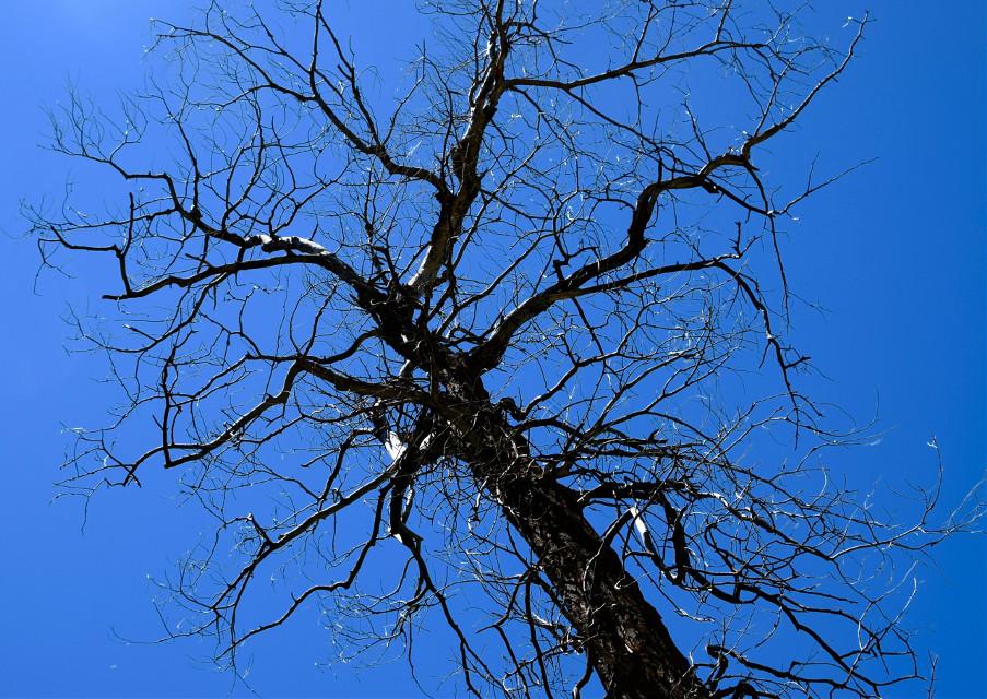 Creeker #nature#landscape#tree#art#freetoedit