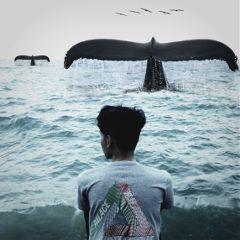 whale birds water freetoedit