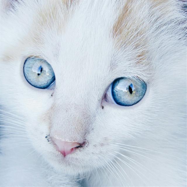 😻Be unique😺  #pets #petsandanimals #cat #photography #eyes