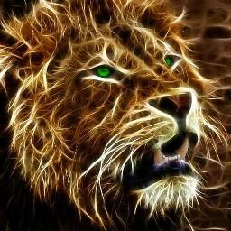 lion ilike