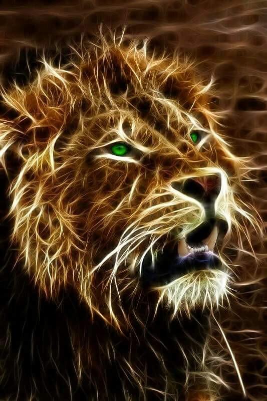 #lion  #Ilike <3   *.*