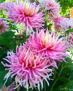 flowers flowerslovers summer nature love