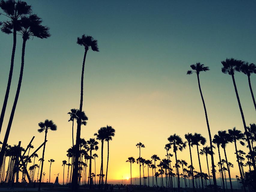 #sunset #beach #palmtrees