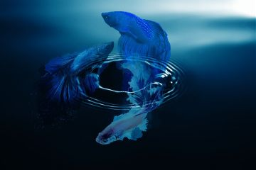 freetoedit remix clipart underthewater fish