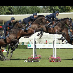 horse horses equestrian equestrianism horseriding