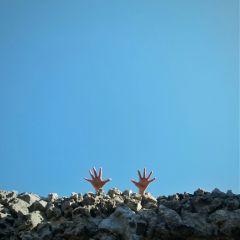 freetoedit handsinframe hands minimalism minimalist