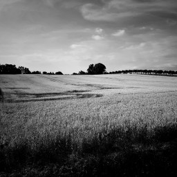 blackandwhite sky field trees monochrome