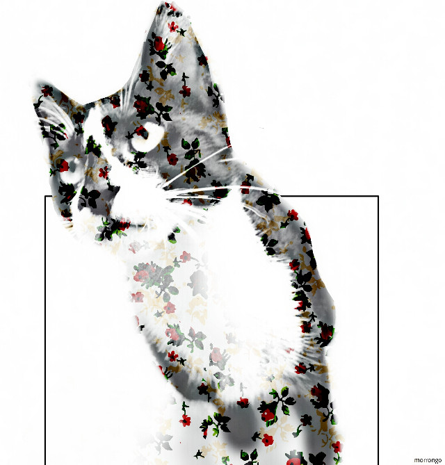 #FreeToEdit  #popart  #edited  #artistic  #myedit  #cats #clipart  #design