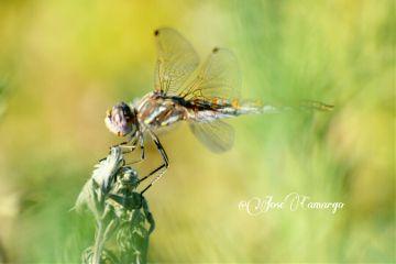 nature photography summer colorful nikon