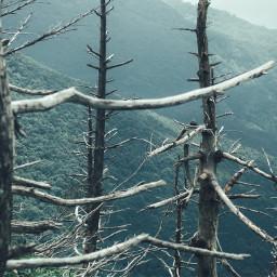 nature tree mountain landscape