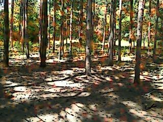 cartoonized edited photography colorful nature