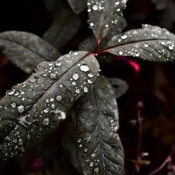 nature natural naturephotography drop shadows