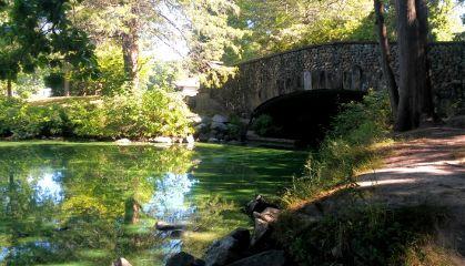 elizabethpark pond bridge rocks trees