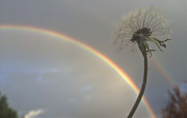 rainbow dandelion wish sky nature
