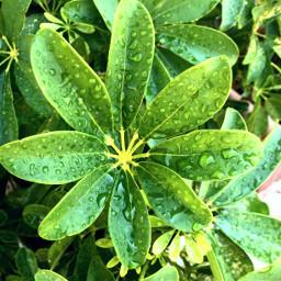beauty simplicity raindrops frommygarden