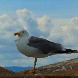 freetoedit pcbird bird animals gaviota