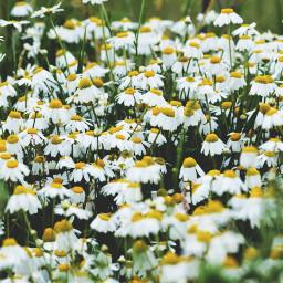 wppfloralcanvas white yellow green flowers freetoedit