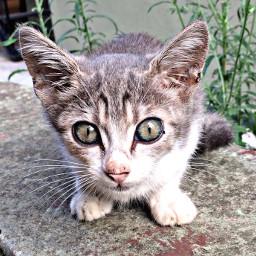 petsandanimals cat cute baby photo