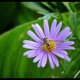 insects flowers garden macro colorful