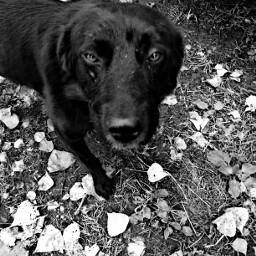bw bw_lover black blackandwhite pets petsandanimals emotion nature romania love